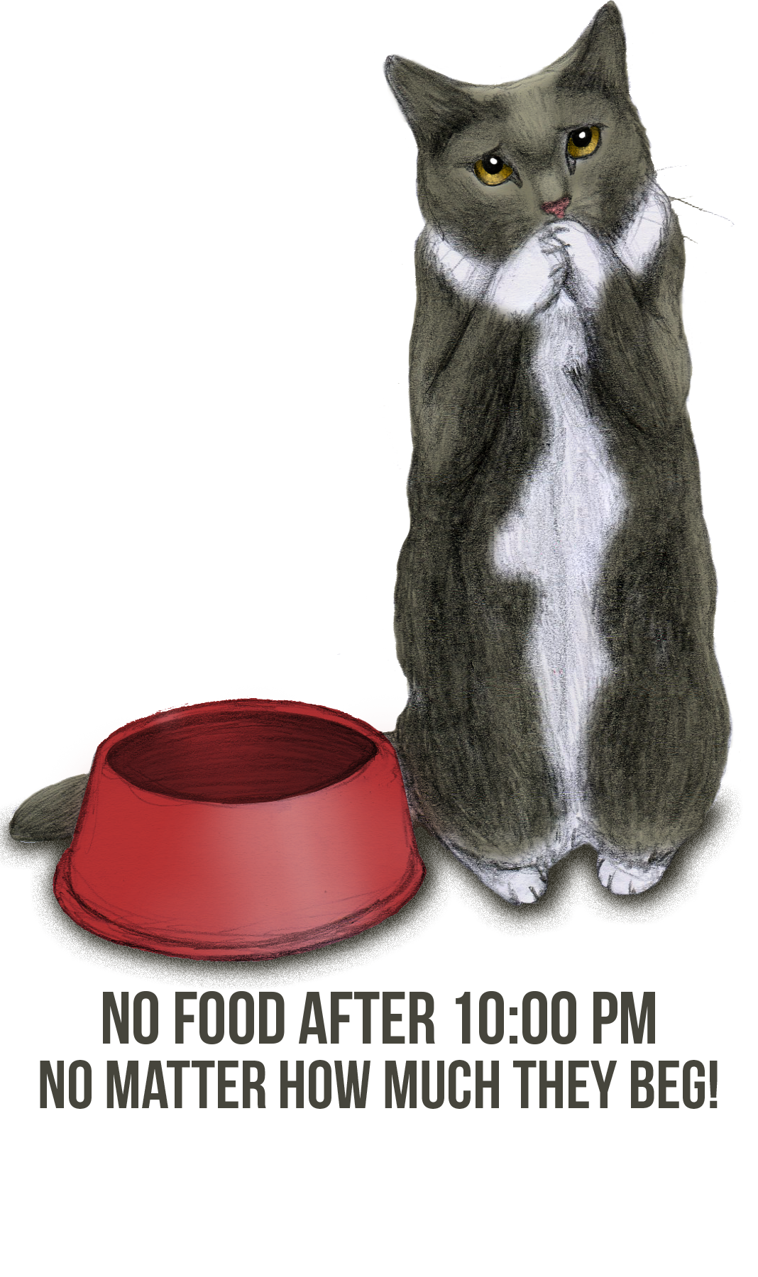 A drawing of a gray and white cat standing on his hind legs begging beside an empty red food bowl. The caption reads no food after 10:00pm no matter how much they beg!